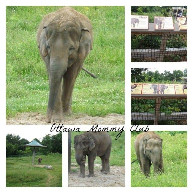 Rosamond Gifford Zoo ~ Elephant
