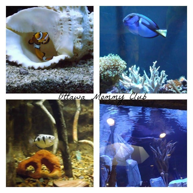 Rosamond Gifford Zoo ~ fishes
