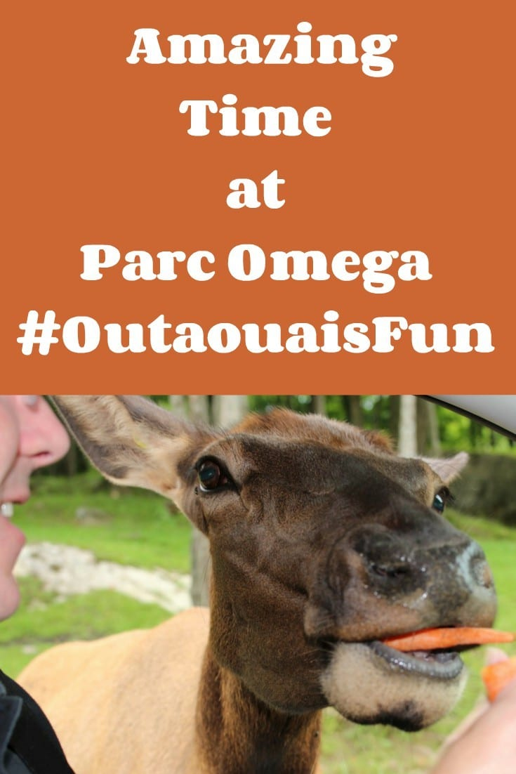 Amazing Time at Parc Omega #OutaouaisFun