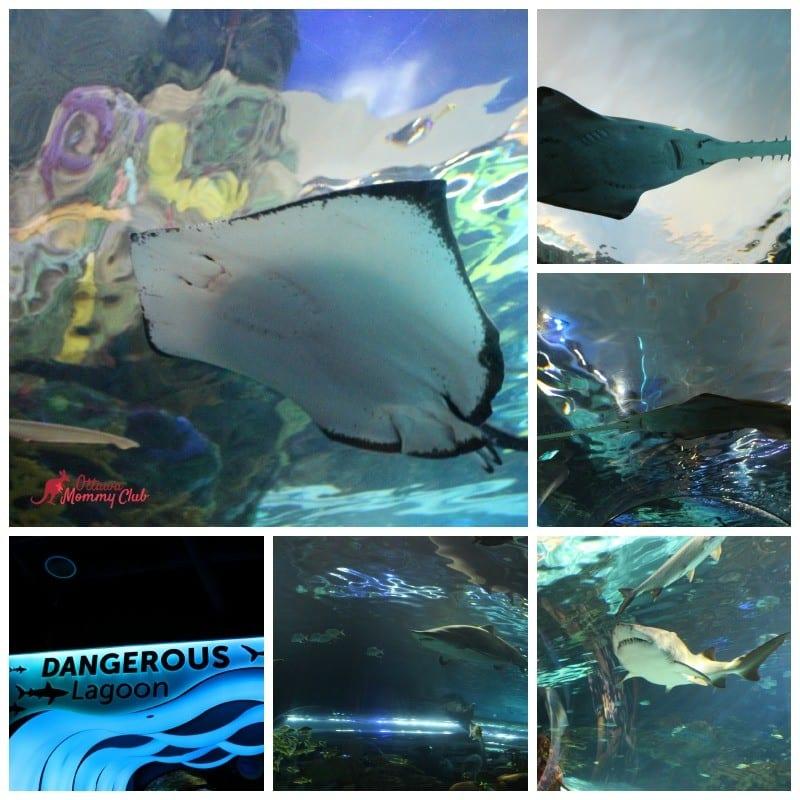 Ripley's Aquarium- Dangerous Lagoon