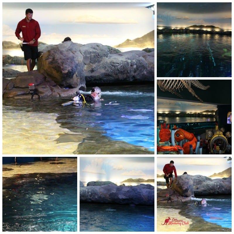 Ripley's Aquarium Shoreline Gallery