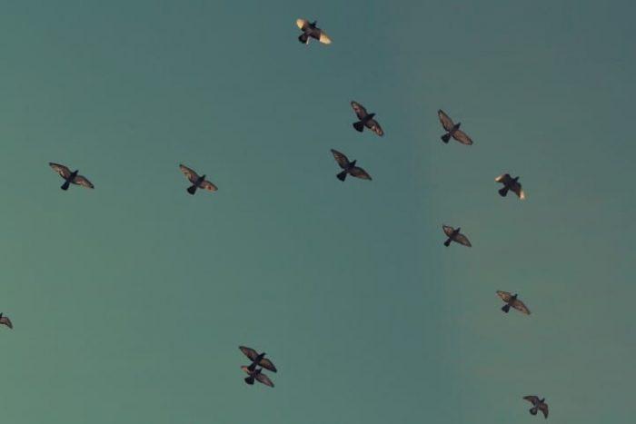 flock (Small)