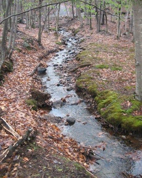 Parc Omega trail