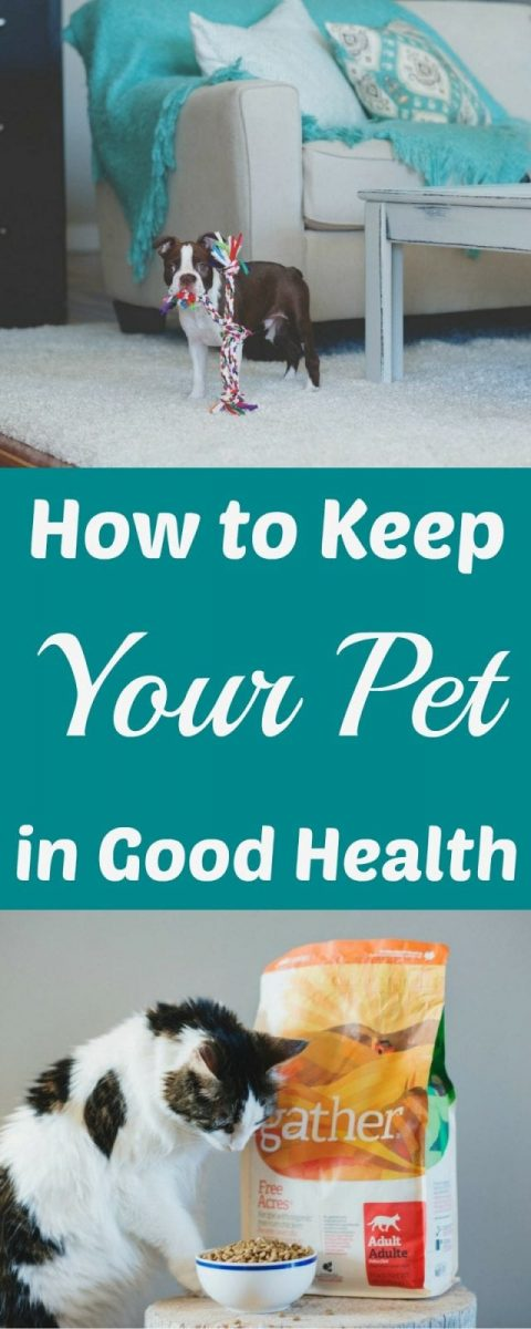 How to Keep Your Pet in Good Health
