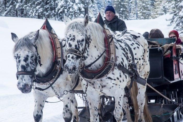 Sleigh Rides in the Ottawa Region