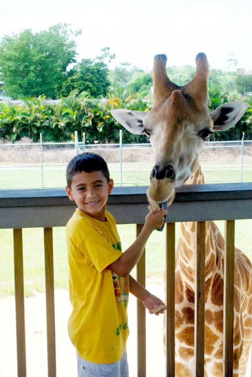 Awesome Florida Vacations For the Family