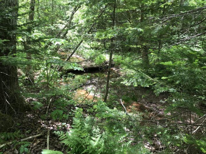 Anne Gables Balsam Hollow Trail