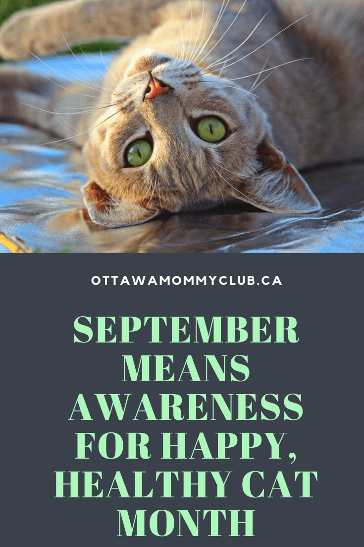 September Means Awareness for Happy, Healthy Cat Month