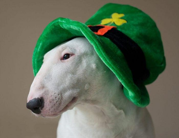 Fun Green Ideas For Saint Patrick's Day