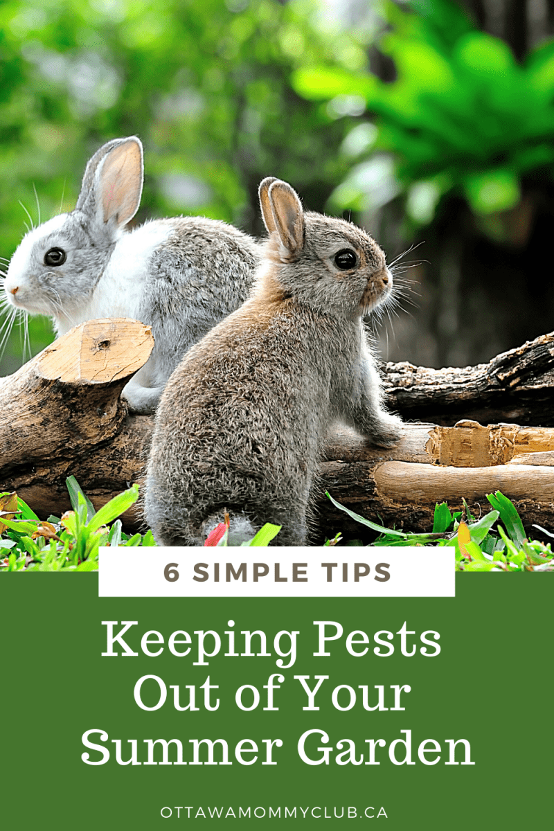 Keeping Pests Out of Your Summer Garden