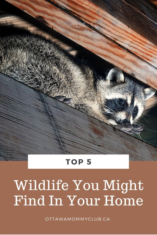 Top 5 Wildlife You Might Find In Your Home