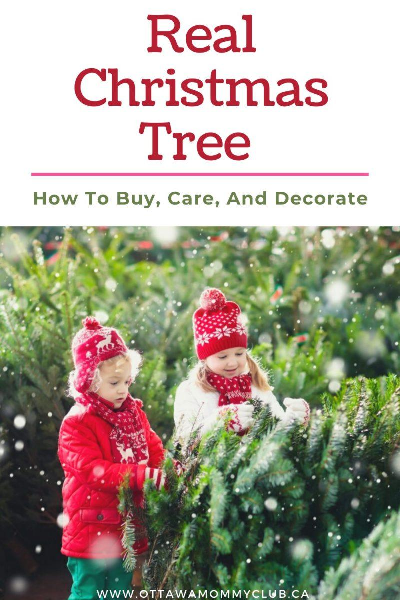 Real Christmas Tree How To Buy Care And Decorate Omc
