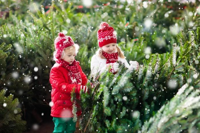 Family selecting Christmas tree.