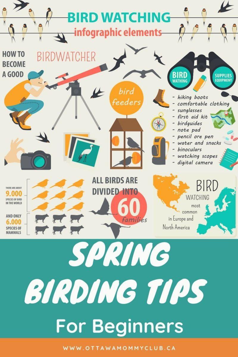 Spring Birding Tips For Beginners