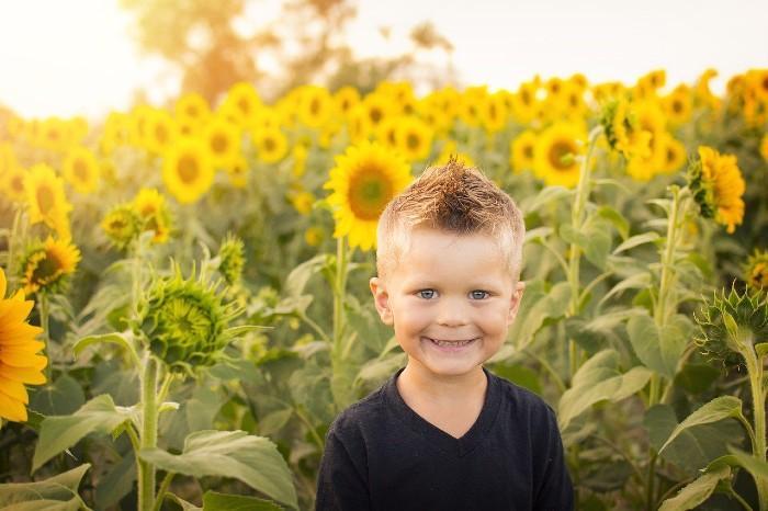 boy in a sunflower garden
