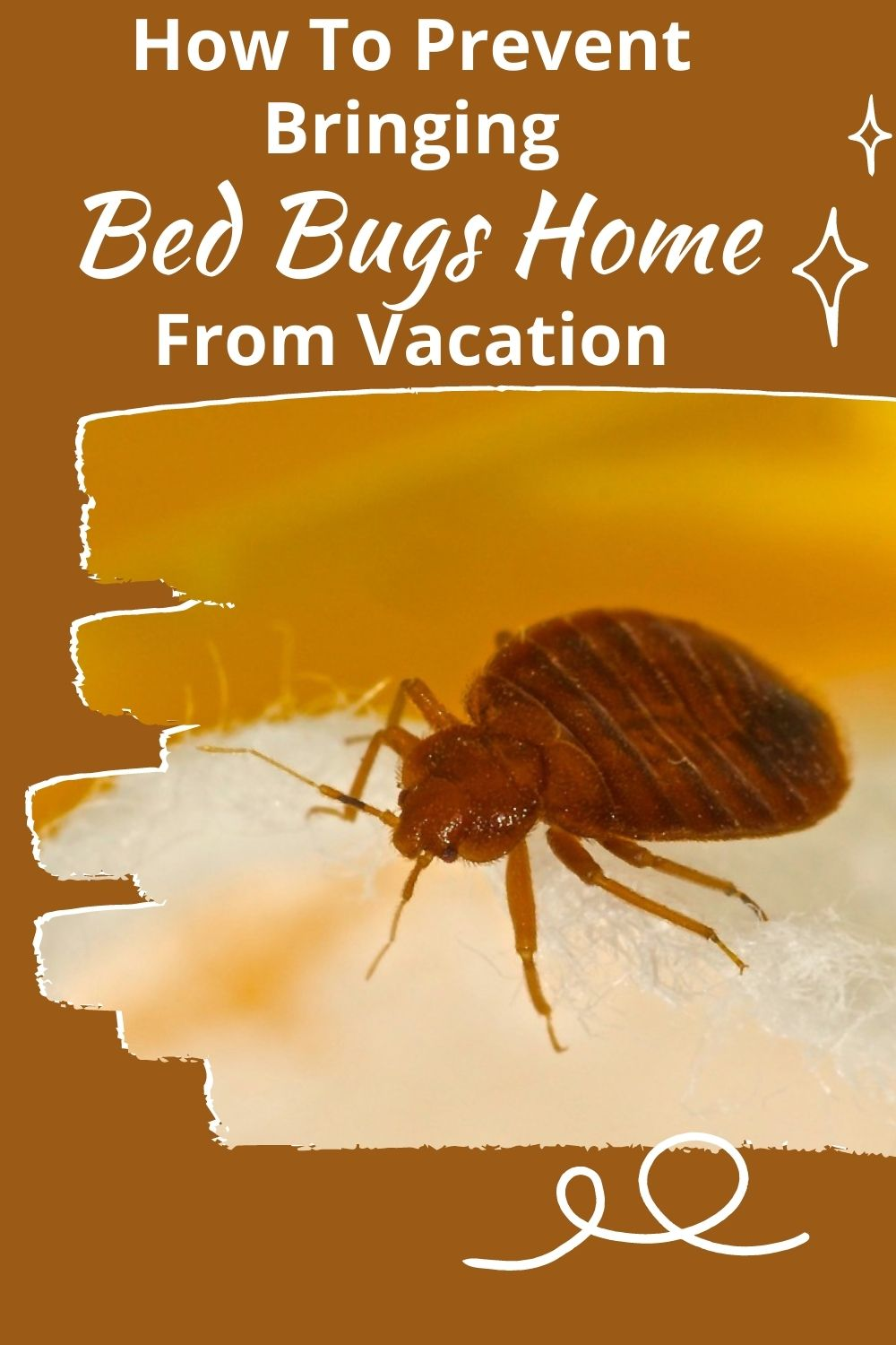 How To Prevent Bringing Bed Bugs Home From Vacation